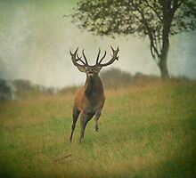 Charging Stag by peaky40