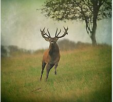 Charging Stag Photographic Print