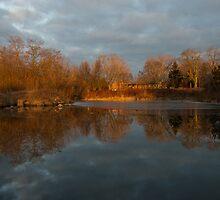 Of Trees and Mirrors - Lake Ontario, Toronto, Canada by Georgia Mizuleva