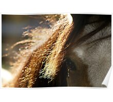 11.10.2013: Welsh Pony I Poster