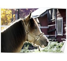 11.10.2013: Welsh Pony II Poster
