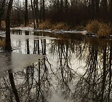Of Trees and Mirrors - Prince Edward County Forest by Georgia Mizuleva