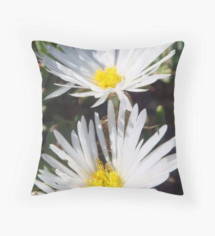 Wit in Namakwaland Throw Pillow