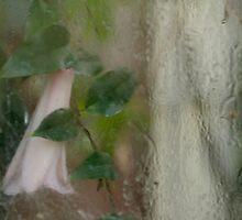 flower behind the glass by rysunki-malunki