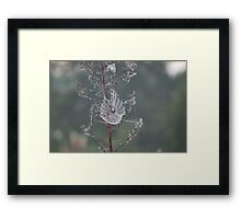 Nature's Engineers 8 Framed Print