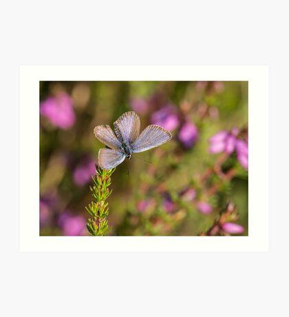 Butterfly on heather Art Print