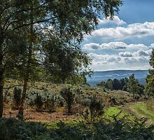 A walk on Woolbeding Common by Judi Lion