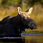 Swimming with Moose by Jim Cumming