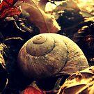 Autumn by PerkyBeans