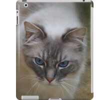 Ragdoll Cat iPad Case iPad Case/Skin