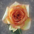 The Kiss of the Rose by RC deWinter