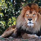 The King by maureenclark