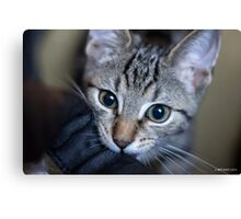 In For The Close Up Canvas Print