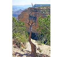 Grand Canyon Deadwood Study 4  Photographic Print