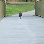 Turkey Casually Strolling Across a Bridge by KittenFlower