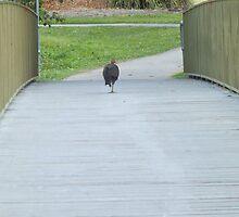 Turkey Casually Strolling Across a Bridge by KittenFlower