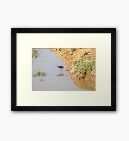 """""""Stalk"""" Framed Print"""