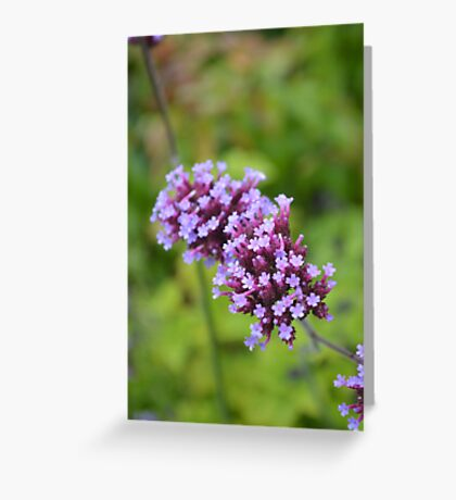 FLOWER AT HAREWOOD HOUSE Greeting Card
