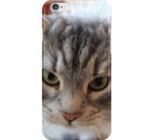 Siberian cat iPhone Case/Skin
