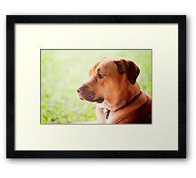 Handsome bloke Framed Print