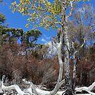 Fraser Island - Wathumba by Cassie Robinson