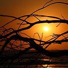 Fraser Island - Sunrise by Cassie Robinson