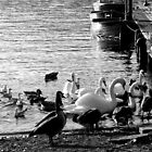 Feeding the Ducks - Lake Windermere by rsangsterkelly