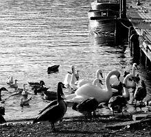 Feeding the Ducks - Lake Windermere by rsangsterkelly