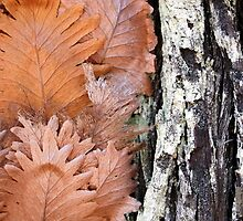 Fraser Island - Bark & Leaves by Cassie Robinson