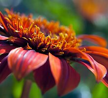 Orange Flower in a Garden by William Martin