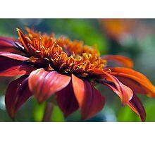 Orange Flower in a Garden Photographic Print