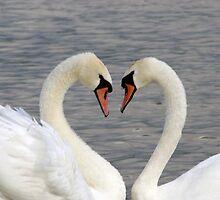Love birds by Cliffyj