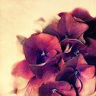 summer love by lucyliu