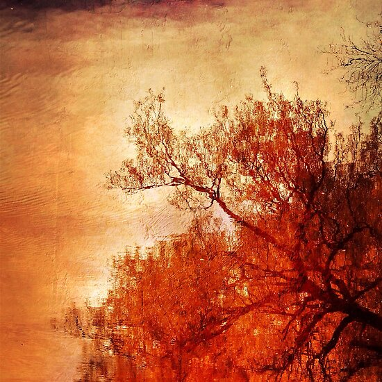 Tree by Jean-François Dupuis