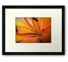 Eye of The Tiger, Lily Framed Print