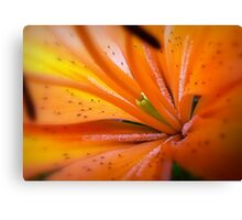 Eye of The Tiger, Lily Canvas Print