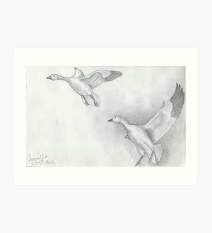 Snow Goose Flying Art Print