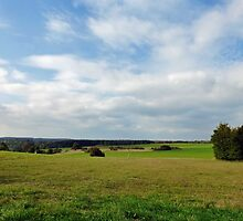 Steinheimer Heide - Heathland/Muir in Southern Germany by Bine