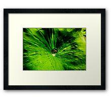 watre droplet on lotus leaf Framed Print
