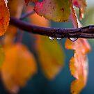 Fall Rain by Craig Forhan