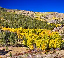 Colorado Gold Blue by Bo Insogna