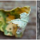 November Diptych  2014 by Lisa  Epp