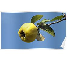 Ladybird and Quince Poster