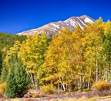 Rocky Mountain Autumn Bonanza by Bo Insogna