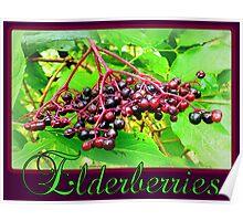 Elderberries Poster