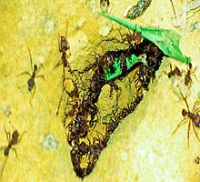 The ant assed. by ALEJANDRA TRIANA MUÑOZ