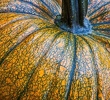 Pumpkin Pumpkin by Bo Insogna