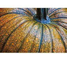 Pumpkin Pumpkin Photographic Print