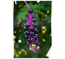 Berries On A Vine Poster