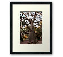 BOAB TREE, Broome Framed Print
